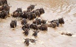 Migration in Kenya.