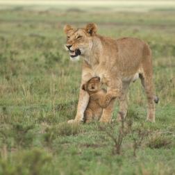 Reunion! Masai Mara.