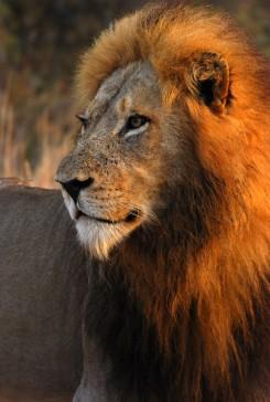 King Leo!
